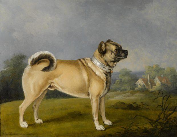 a favorite pug by henry bernard chalon 1802 e1501865340826