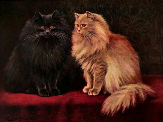 blue and cream persian cats book of the cat 1903