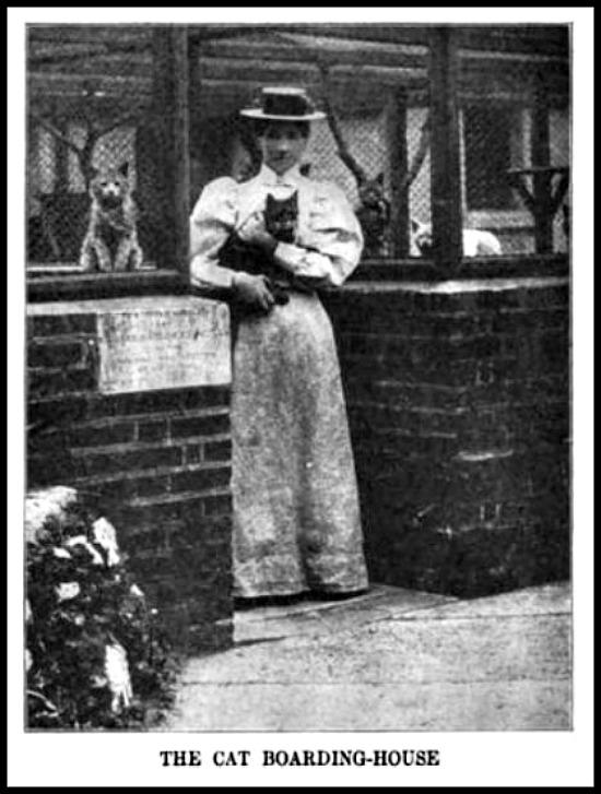 cat boarding house hearst international 1904