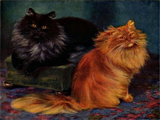 smoke and orange persian cats book of the cat 1903
