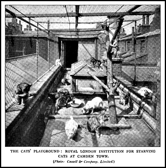 the cats playground book of the cat 1903