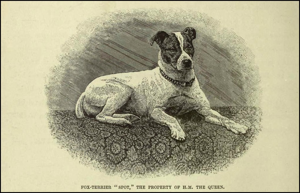 "Engraving of Queen Victoria's Fox Terrier ""Spot"" by Gustav Mützel (1839-1893)"