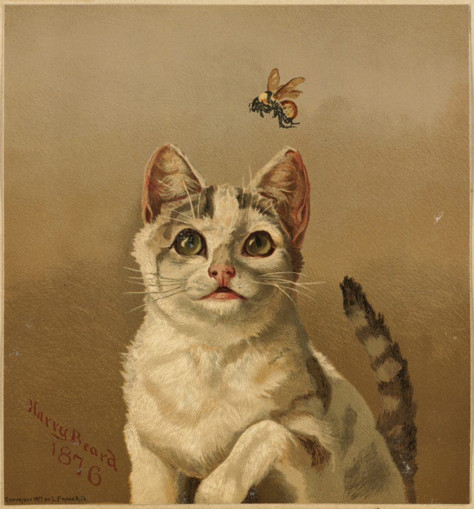 white cat with bee by harry beard 1876 chromolithograph