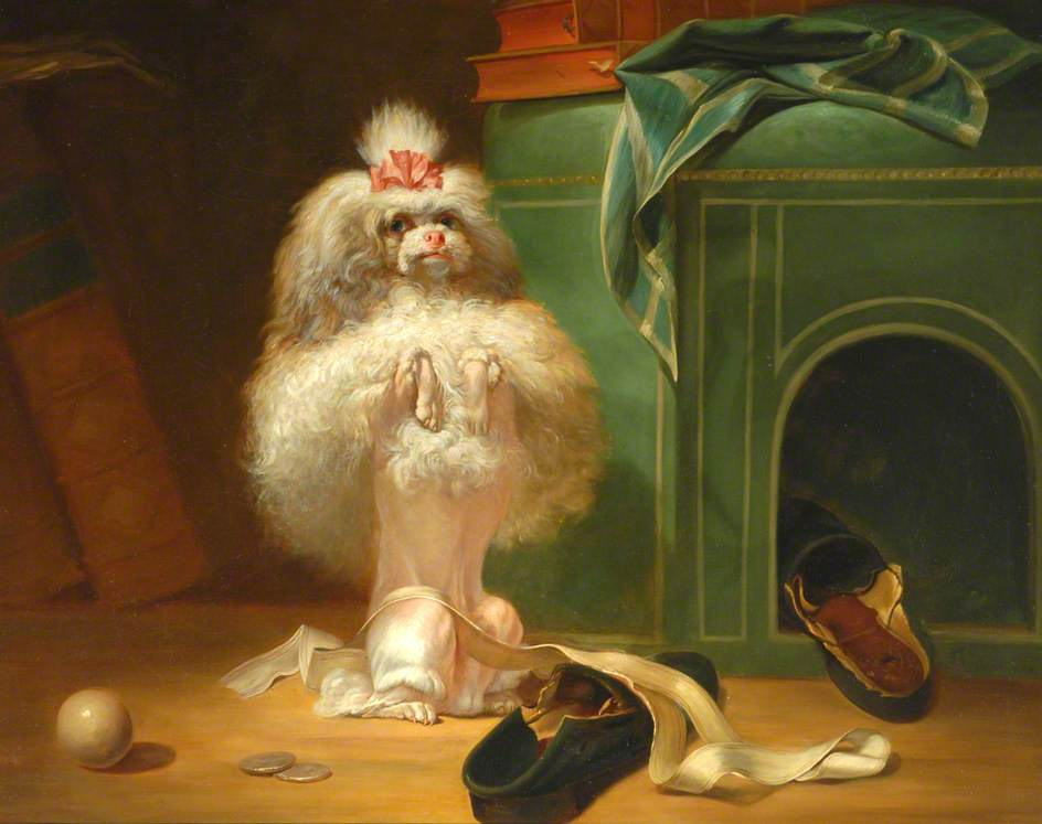 Dog of the Havana Breed by Jean Jacques Bachelier, (1724–1806).(Bowes Museum)