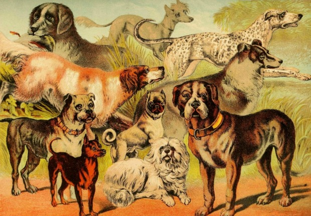 Dog Illustration Johnsons Household Book of Nature 1880