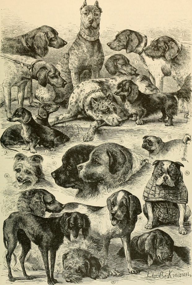 Illustration from Brehms Life of Animals 1895 e1523863879443