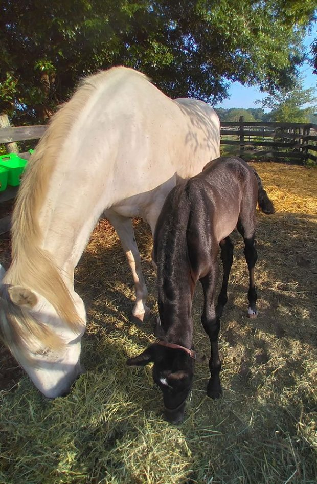 Emotiva and filly Morning of Day 2 1 e1621961088261